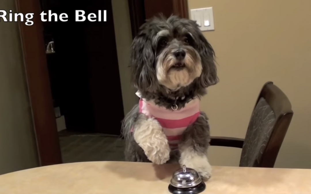LDS Trainer Teaches Dog Adorable Tricks